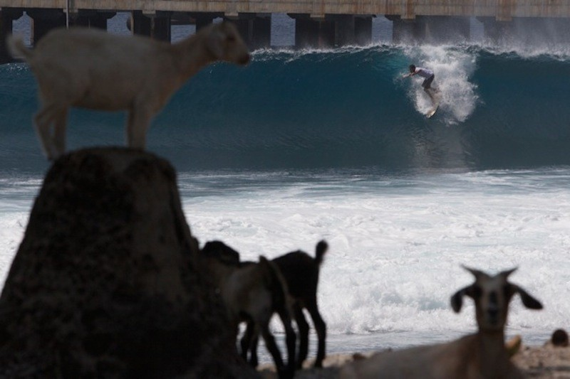 Taylor Steele - Surf Collective - Style List 1