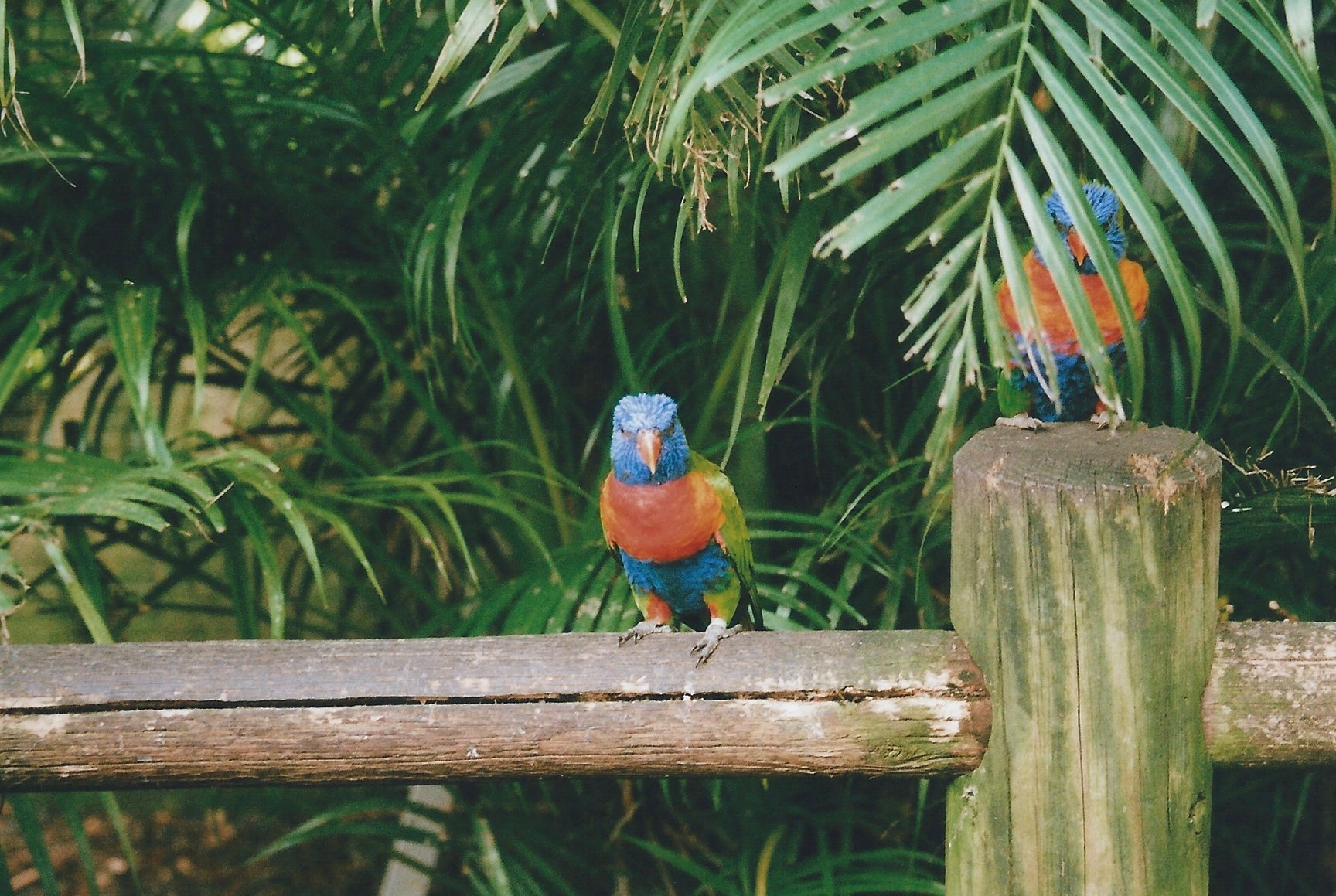 A GUIDE TO GUADELOUPE THE CARIBBEAN S BEST KEPT SECRET